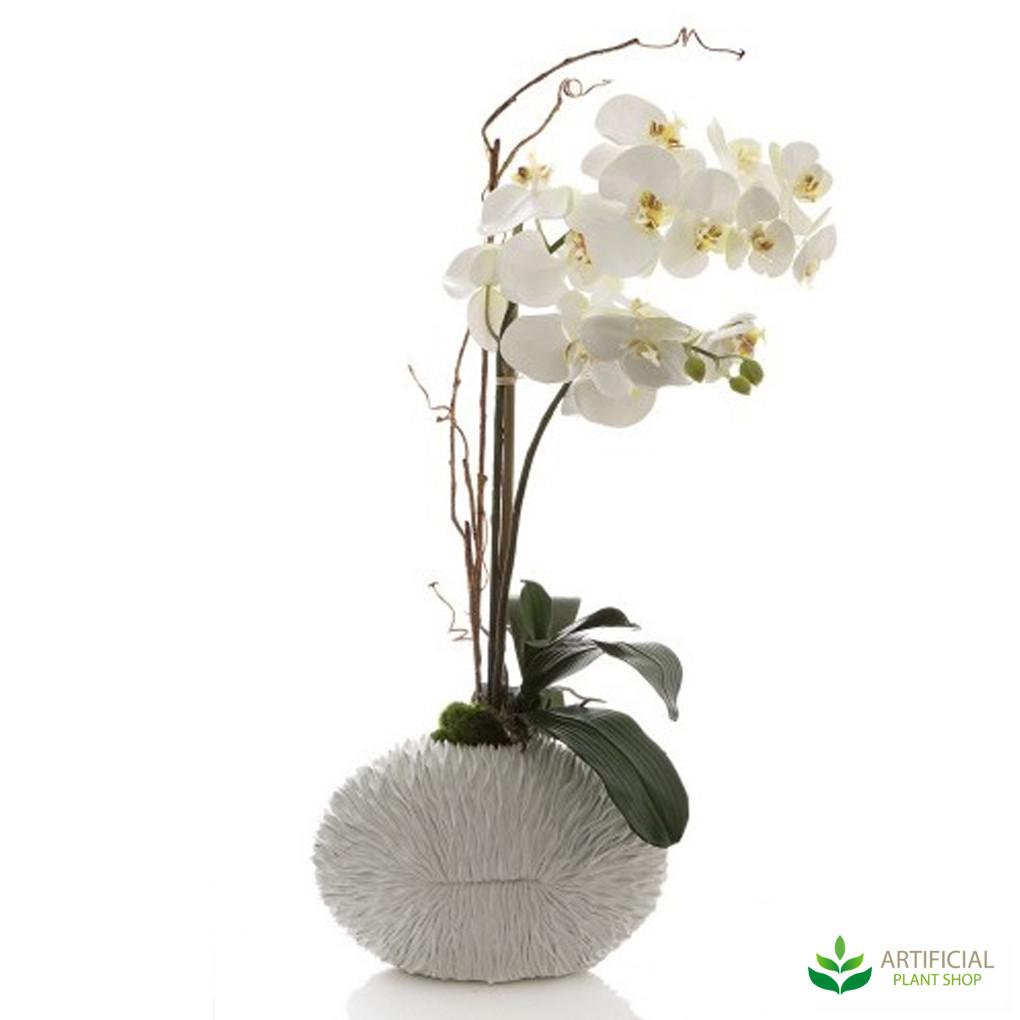 Phal Orchid in White Shell Vase