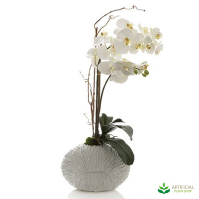 Phal Orchid in White Shell Vase