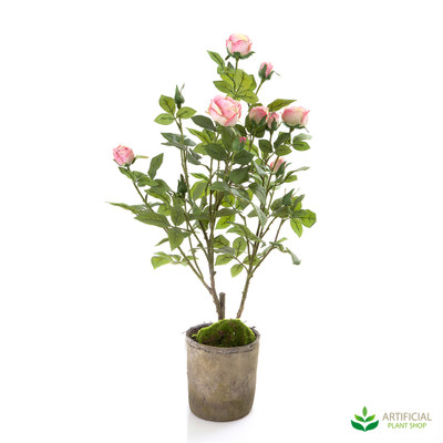 Pink Rose in Terracotta Pot 70cm