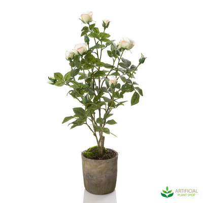 White Rose in Terracotta Pot 74cm
