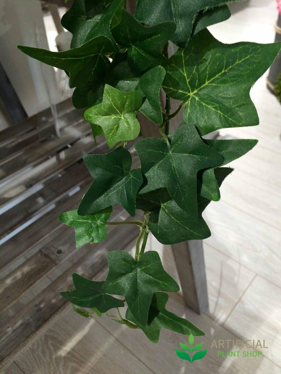 Ivy Bush Leaves