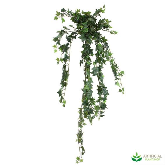 Ivy Bush Vine 1.2m
