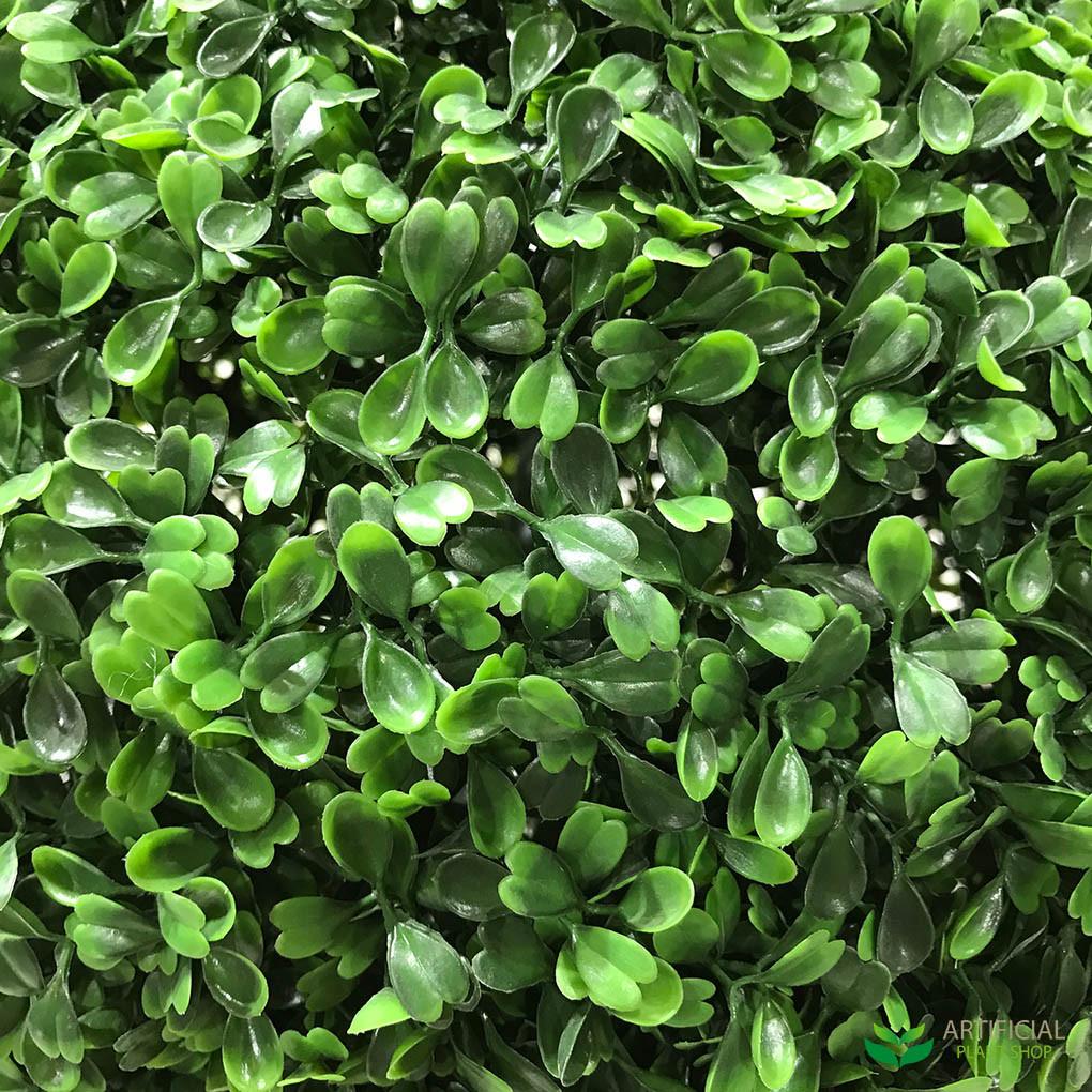 Boxwood Ball leaves