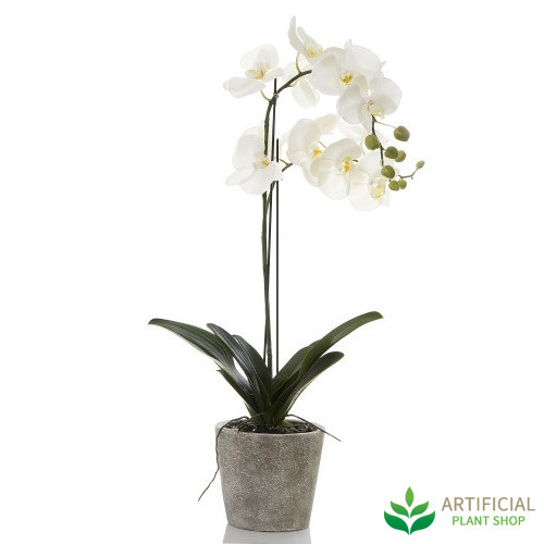 White Orchid in Clay Pot 84cm