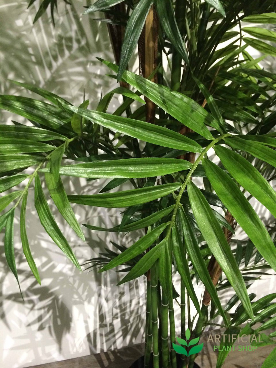Parlour Palm leaves