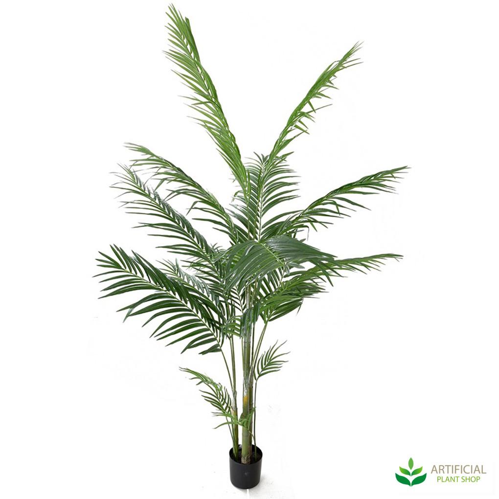 Areca Palm Tree 1.8m