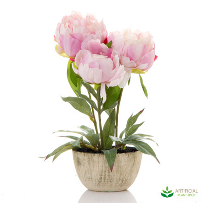 Peony Potted 27cm tall (set of 3)