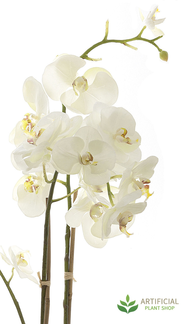 White Orchid Flower Stems