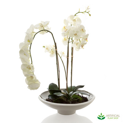 Phalaenopsis Orchid in White Bowl 95cm