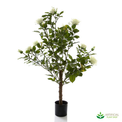 Rose Bush Tree Lime White 1m