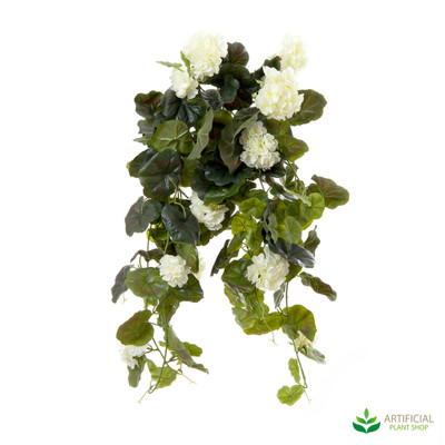 Geranium Bush Trail Cream 60cm