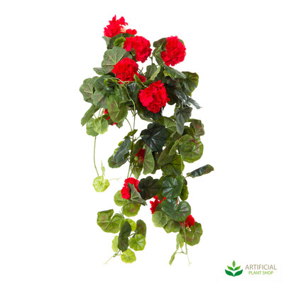 Geranium Bush Trail Red 60cm