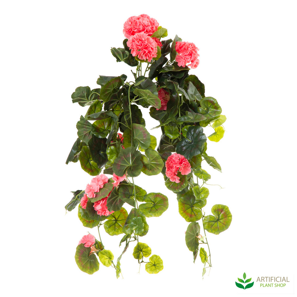 Geranium Bush Trail Peach 60cm