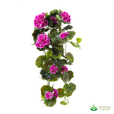 Geranium Bush Trail Purple & White 60cm (pack of 6)