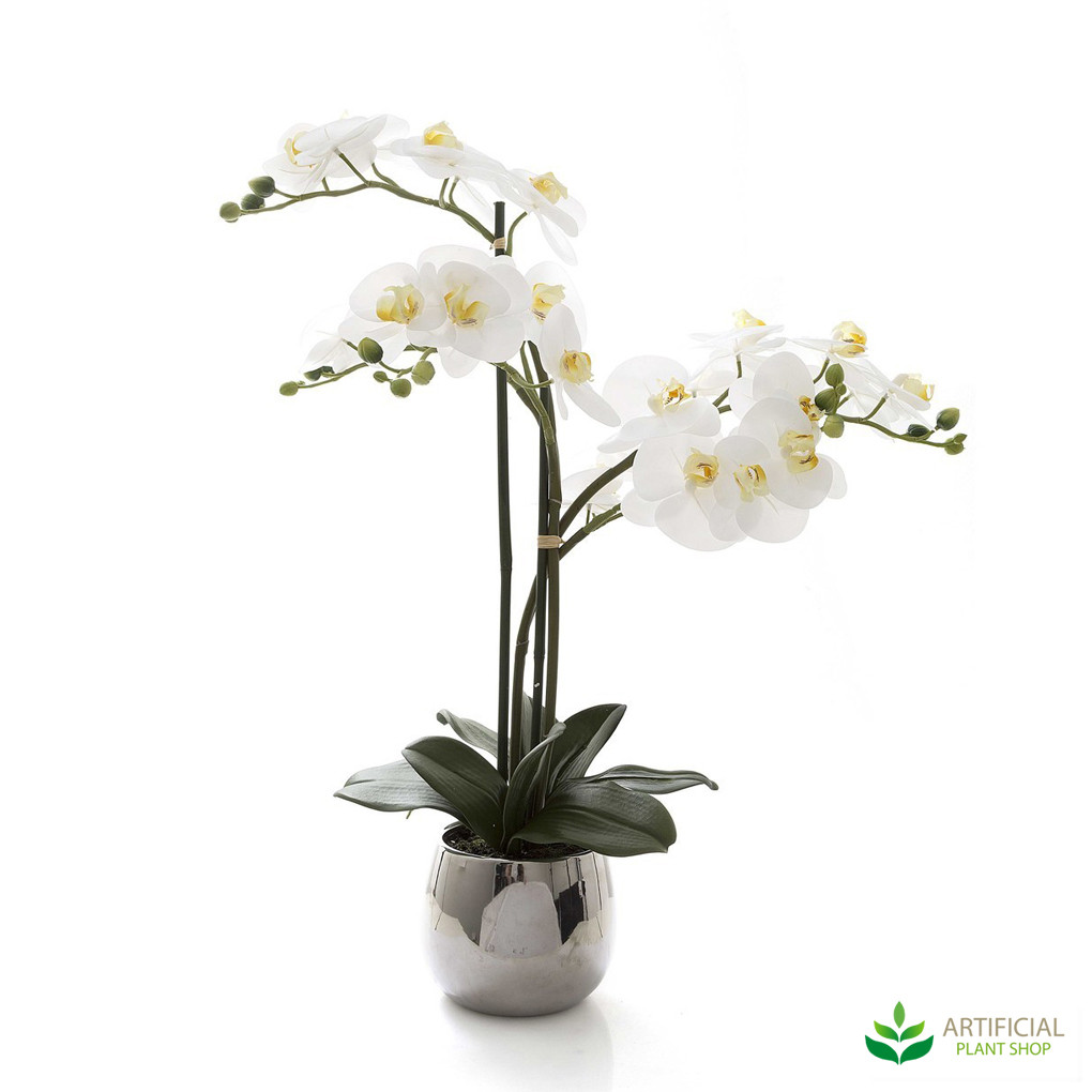 Phal Orchid in Silver Pot 67cm