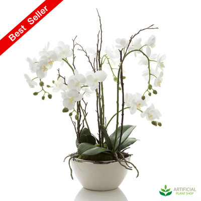 Orchid in White Pot with Silver Rim 60cm - Real Touch