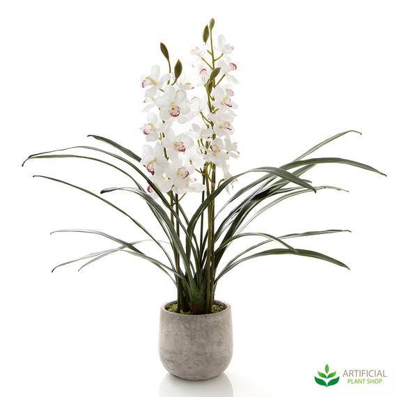 White Cymbidium Orchid in Pot
