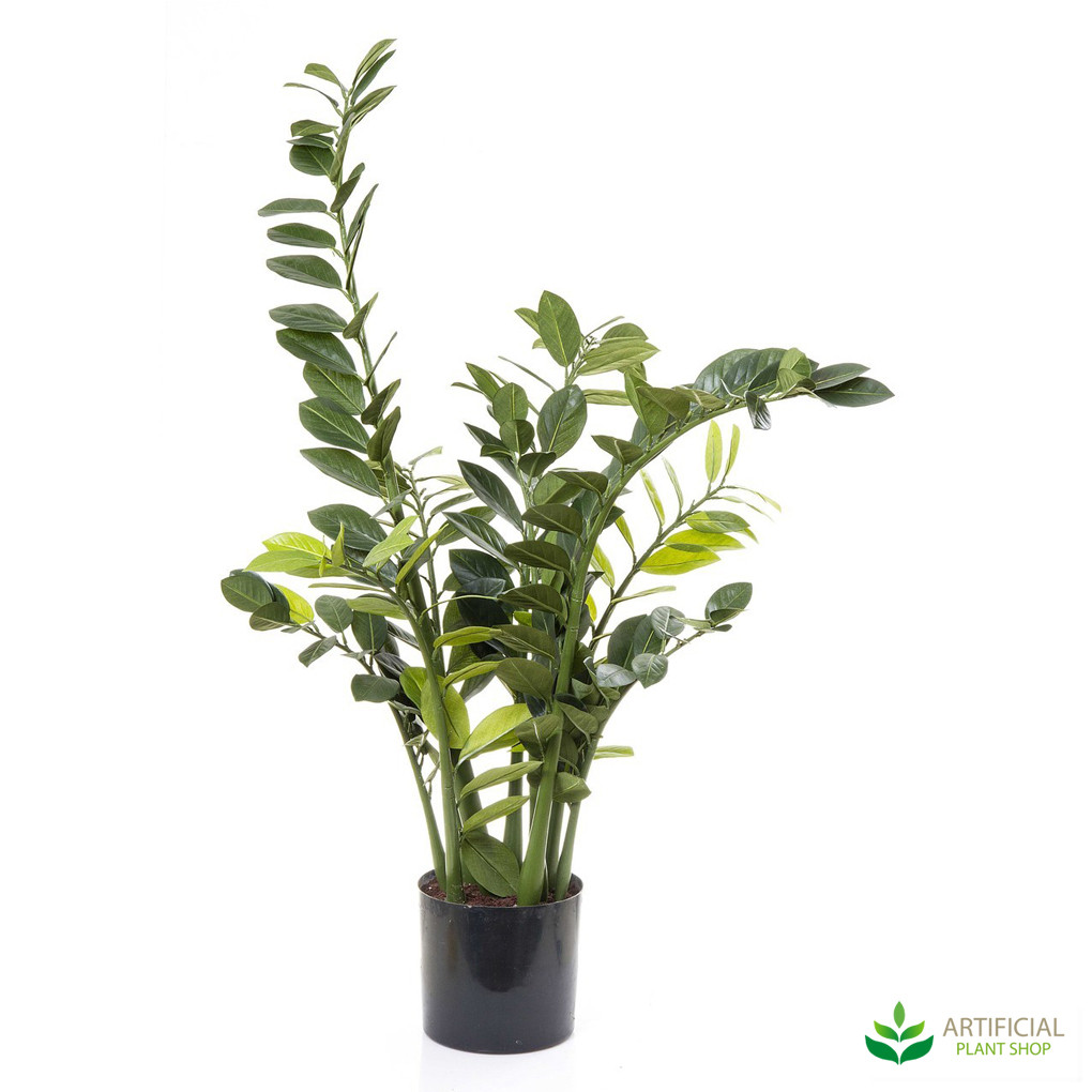 Smargago Plant 1.1m