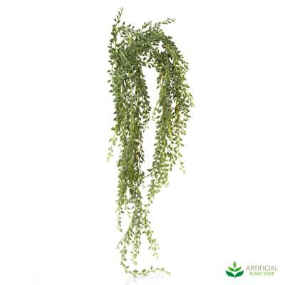 Senecio Hanging Succulent 90cm (pack of 6)