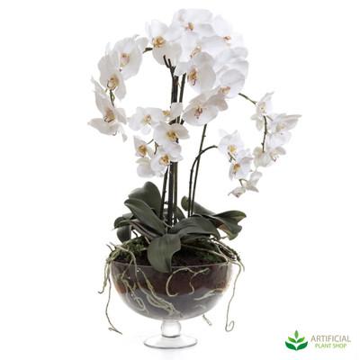 Phalaenopsis Orchid Glass Vase 70cm