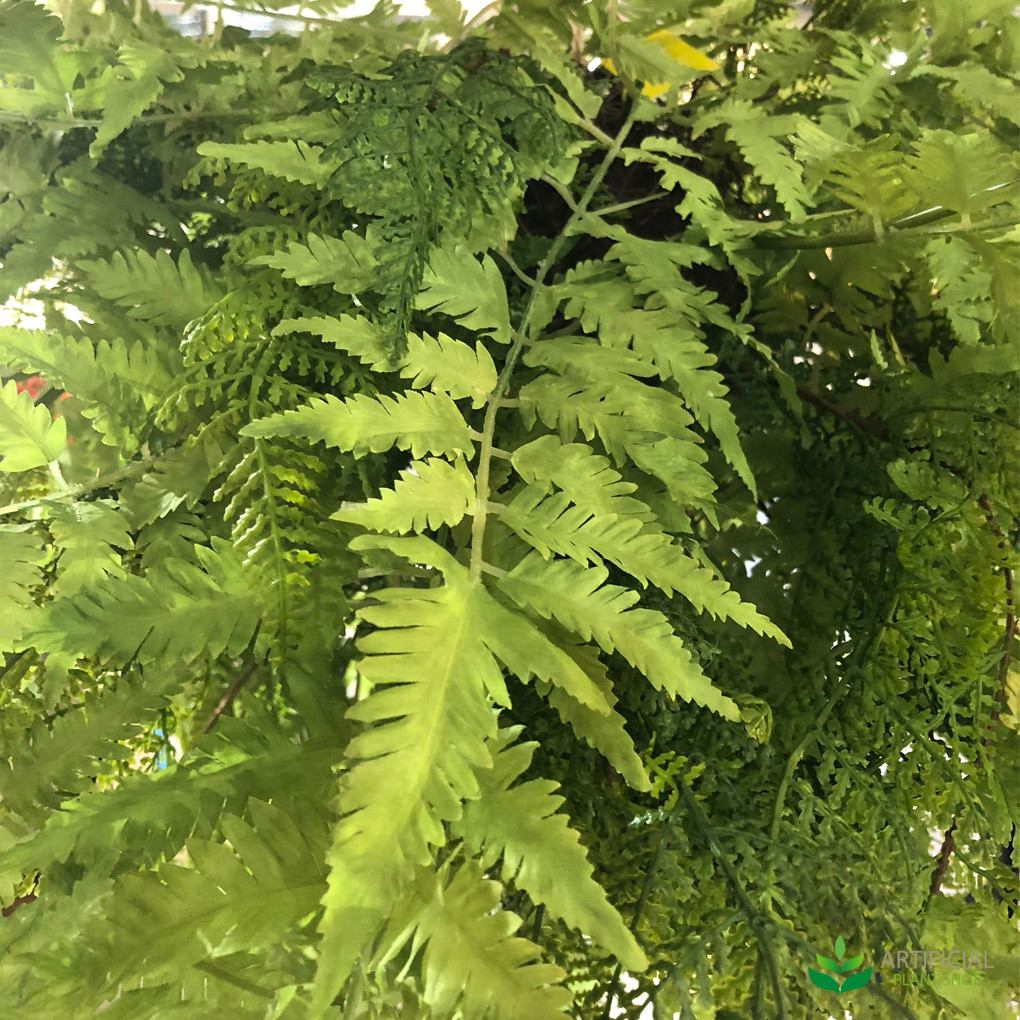 Hanging Fern Fronds