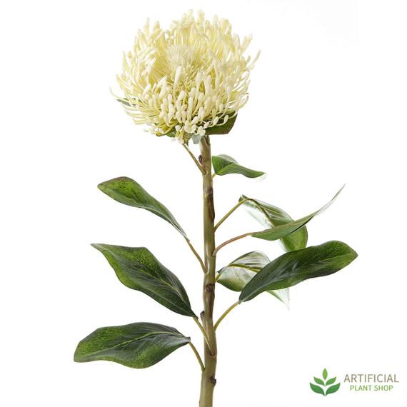 White Pincushion Protea 70cm