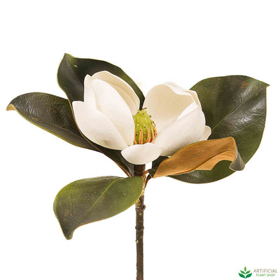 White Magnolia Short Stem 60cm (pack of 6)