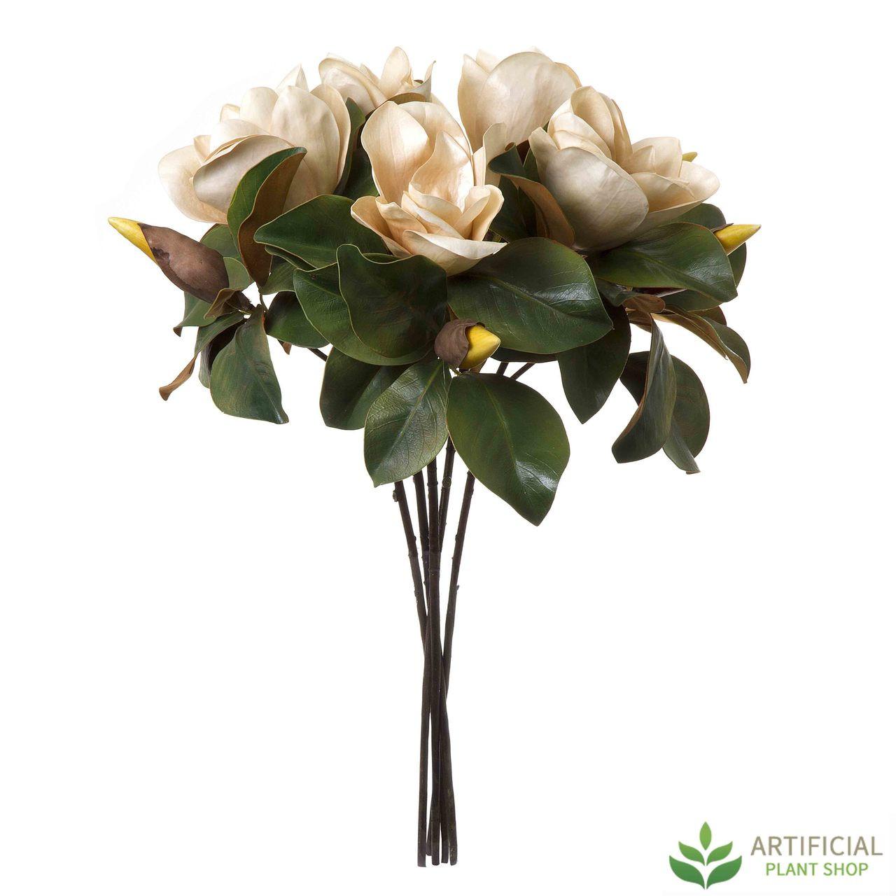 Coffee Magnolia flower bundle