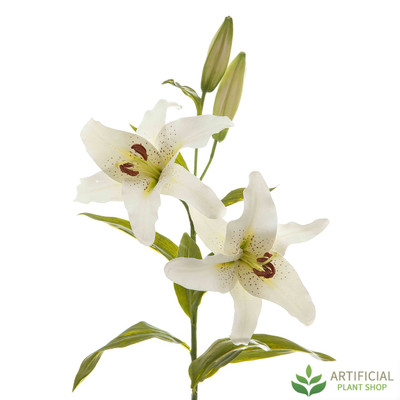 White Robrum Lily 90cm (pack of 6)