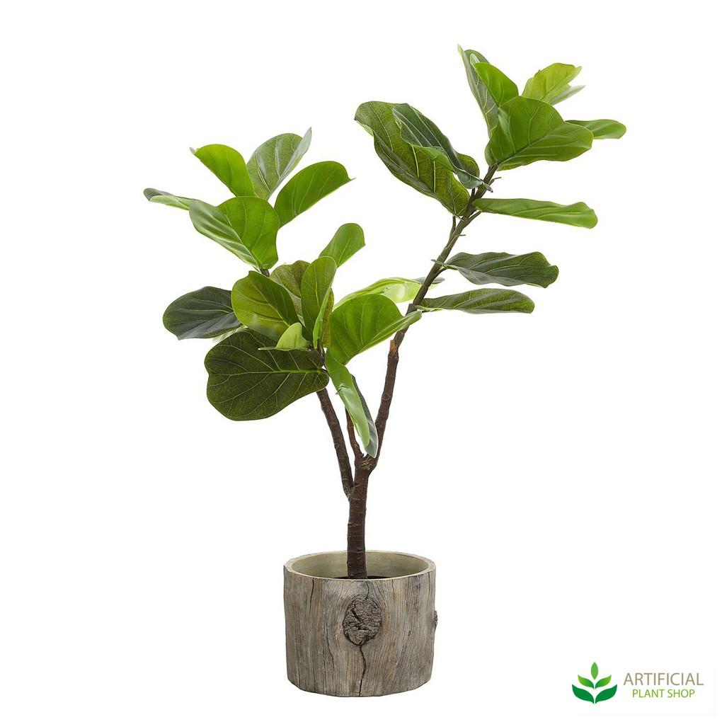 Fiddle Leaf Tree 90cm potted
