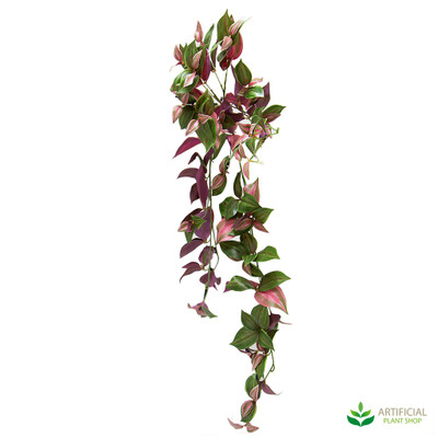 Wandering Jew Bush Purple & Green 94cm
