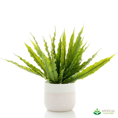 Fern Bush in Pot 35cm