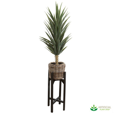 Green Yucca in pot stand 1.3m