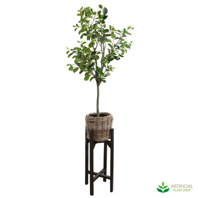 Ficus 1.5m in Rattan Pot Stand
