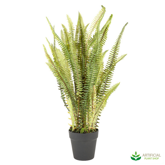 mountain fern potted 74cm