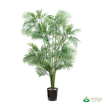 parlour palm tree 1.2m
