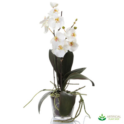 artificial phal orchids in glass vase 58cm