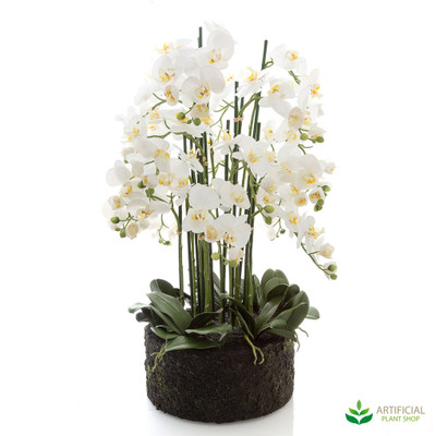 giant orchids in paper pot 90cm