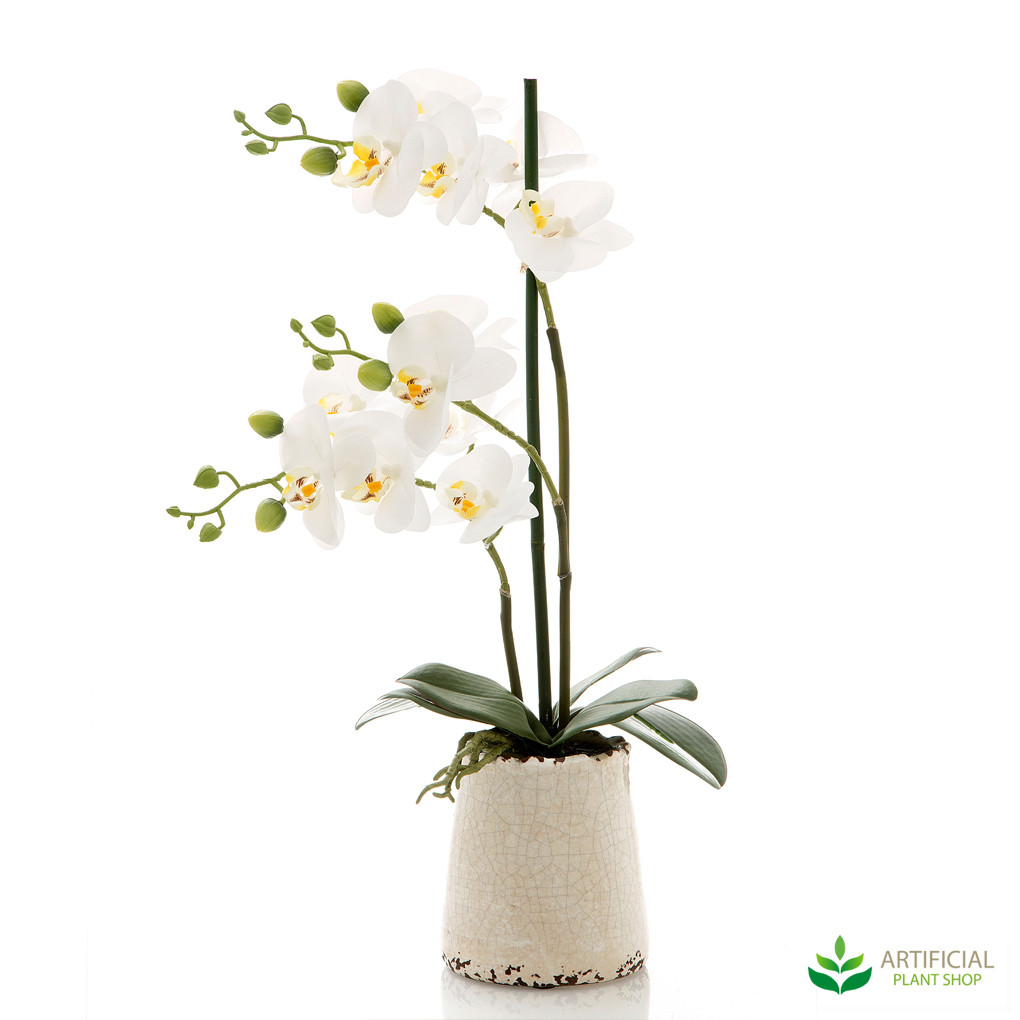 white orchids in ivory pot 50cm