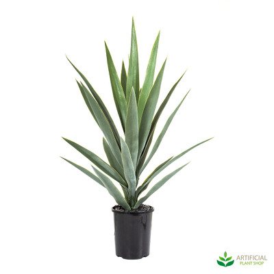 Green Yucca Plant Potted 80cm