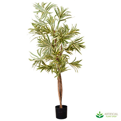 Variegated Dracaena Tree 1.3m