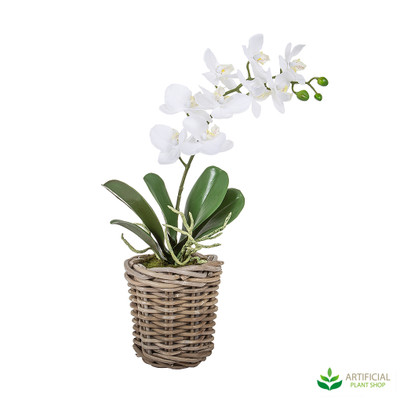 artificial phal orchids in small basket 30cm