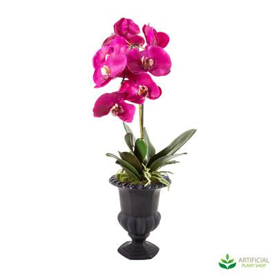 Fuchsia Orchid in Black Urn 65cm