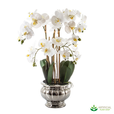 Large White Orchid in Silver Bowl 68cm