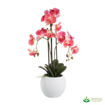 Large Pink Orchid in white pot 65cm
