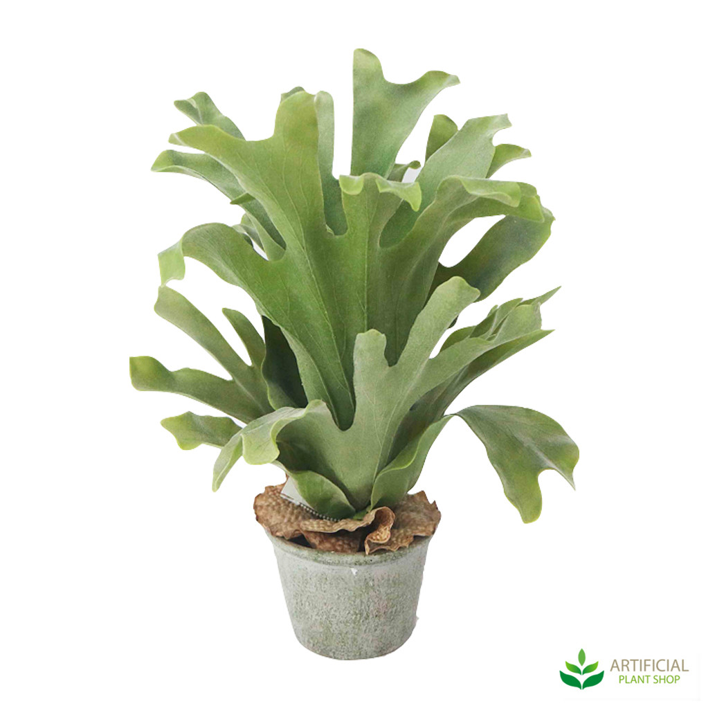 artificial staghorn potted