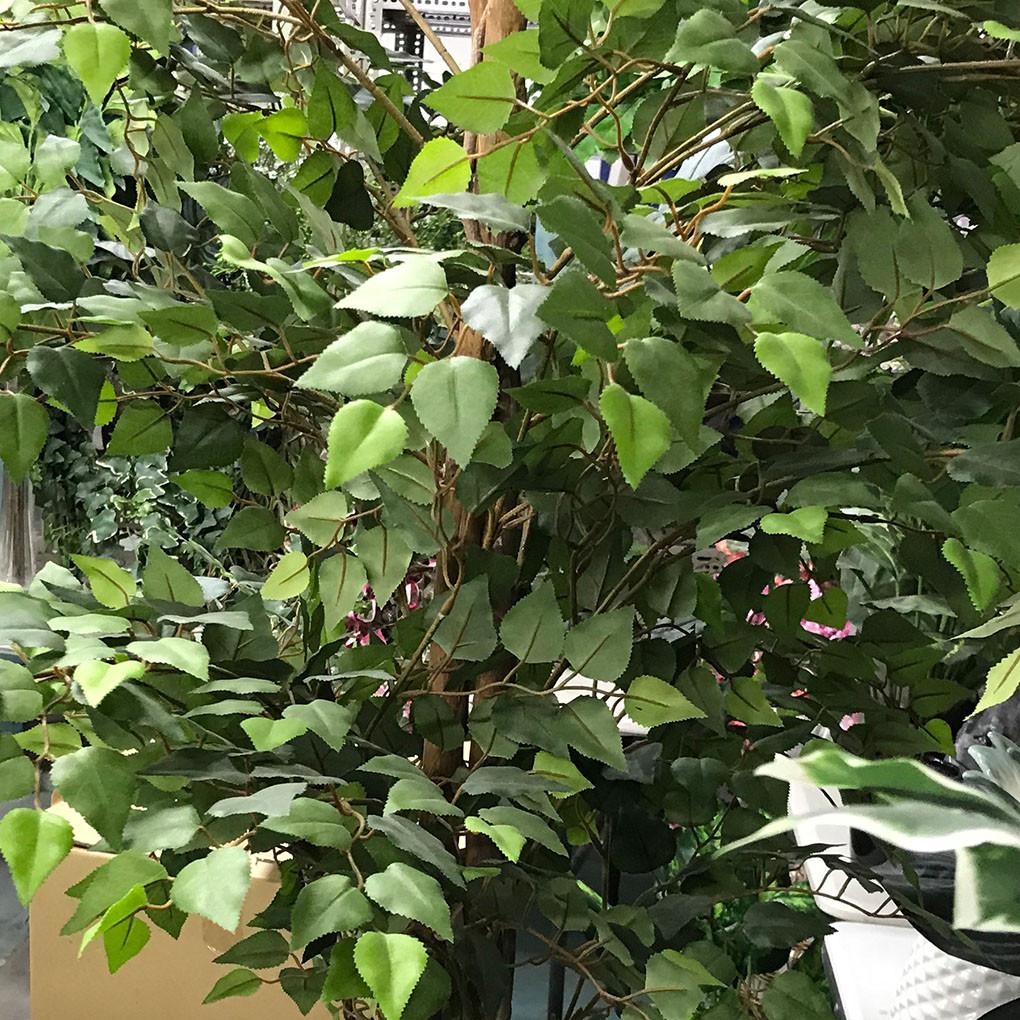 Hornbean Tree Leaves