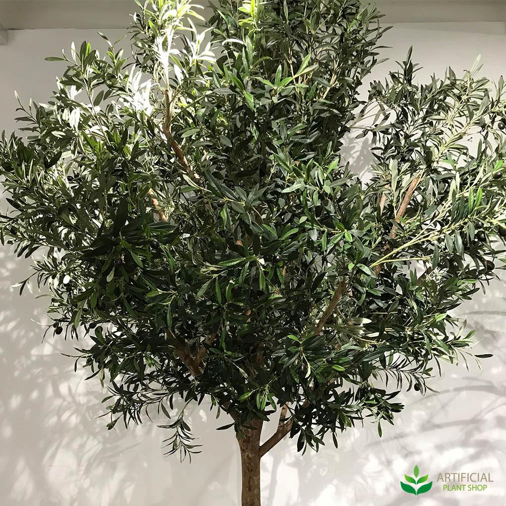 Giant Olive Tree Leaves