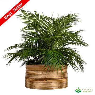 Palm in Haiti Pot 74cm