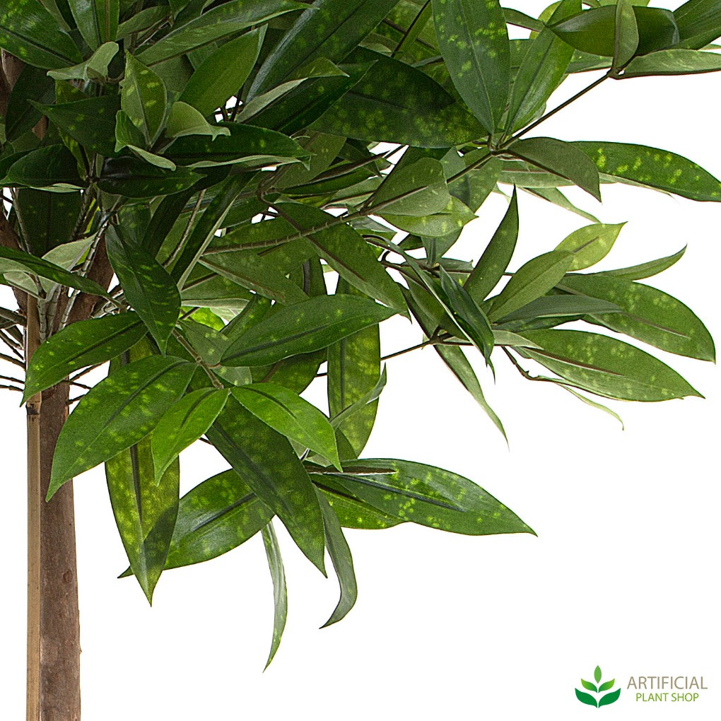 Dracaena tree leaves